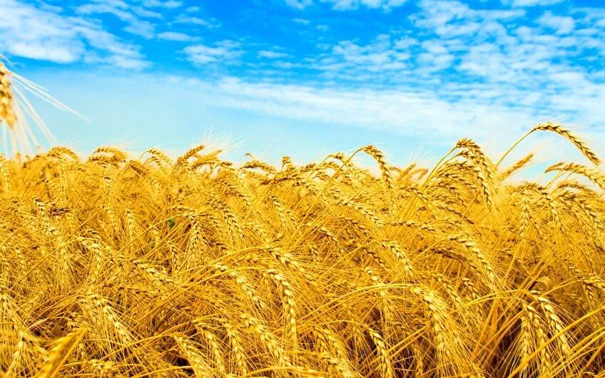 Что собой представляет сельскохозяйственный кооператив
