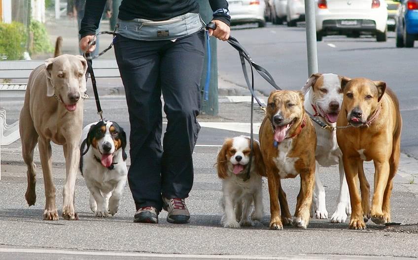 Заработок на выгуле домашних животных