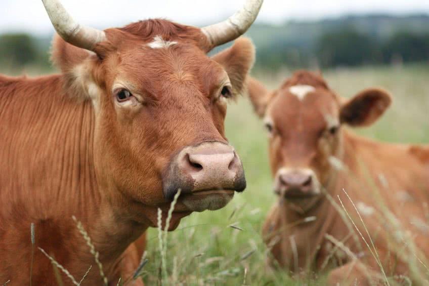 Как начать животноводческий бизнес