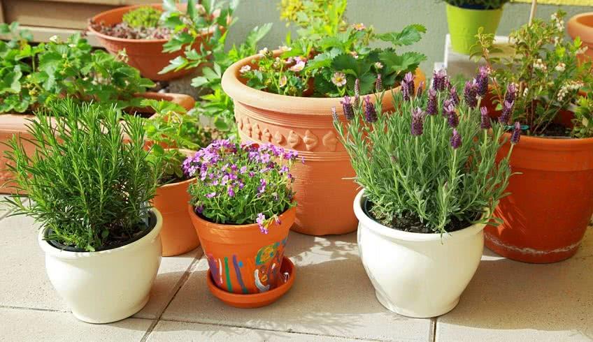 Заработок на разведении растений