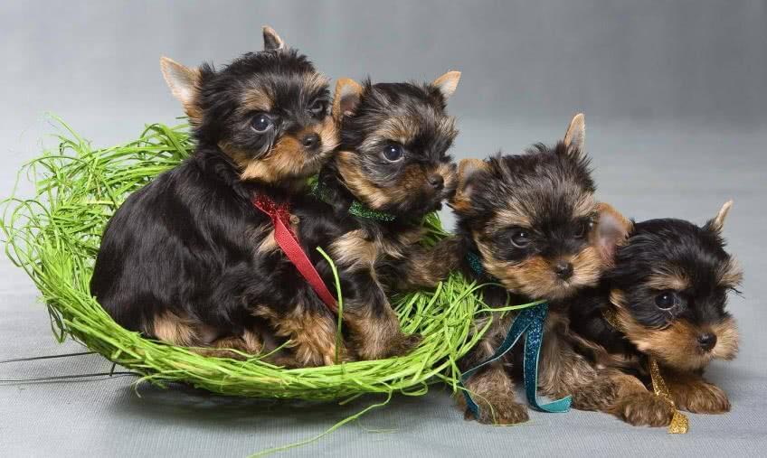 Разведение собак на дому как бизнес