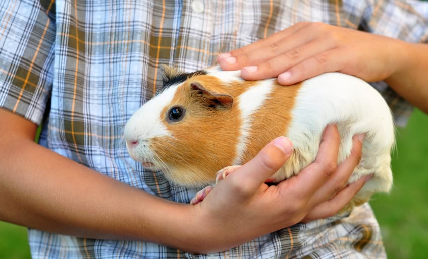 Как заработать деньги ребенку на разведении животных