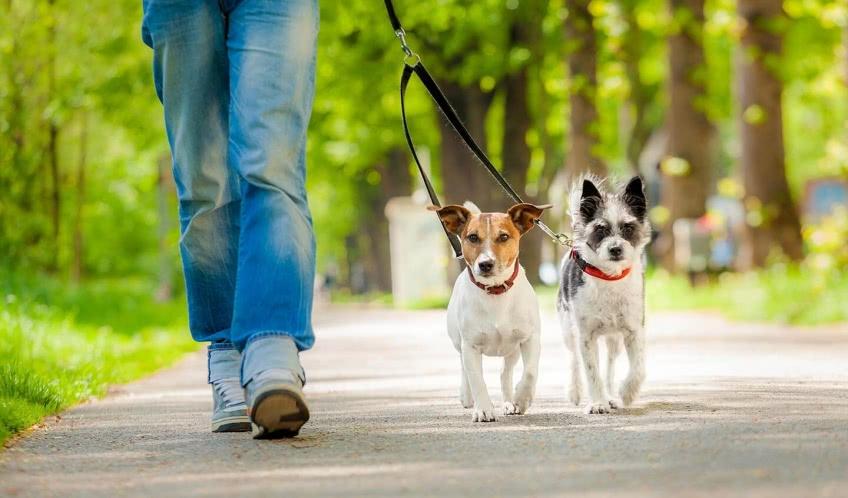 Как ребенку зарабатывать на выгуле собак